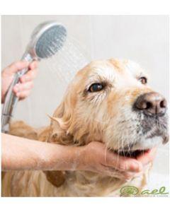 COURS #1: Préparation au toilettage pour votre chien ou chat